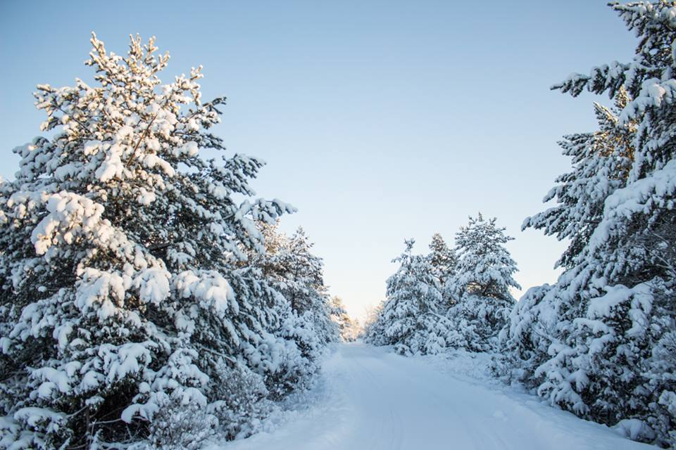 Lumine Saaremaa